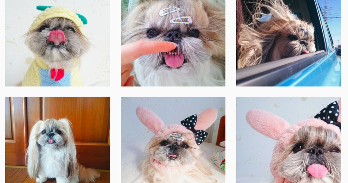 The most stylish dog on Instagram
