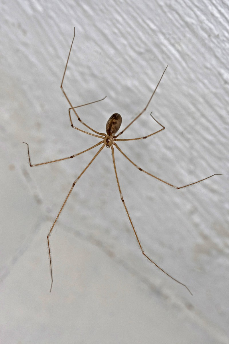 A spider crawls on the wall.