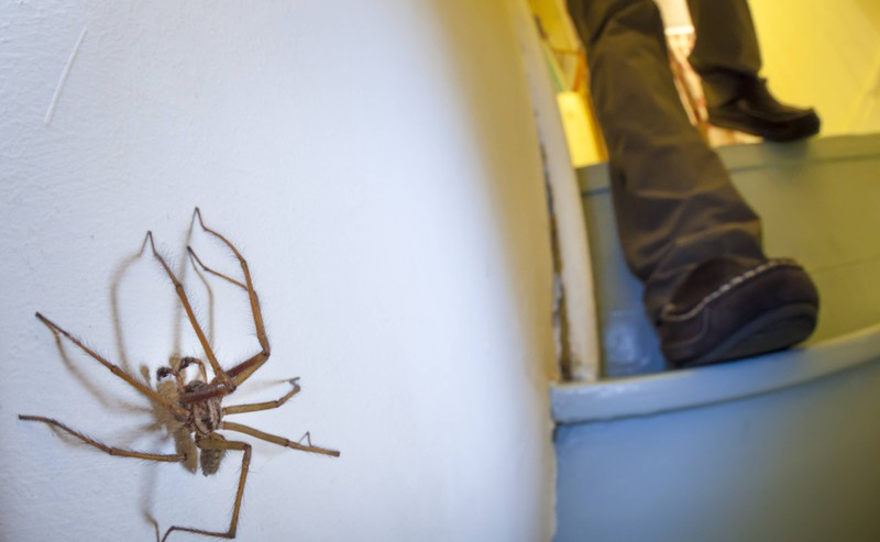 A spider in an apartment about to scare a person.