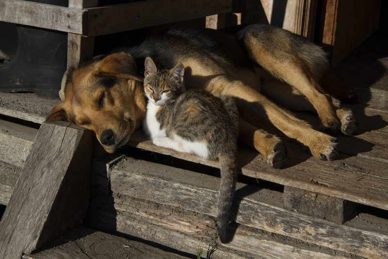 A dog and a kitten cuddle.