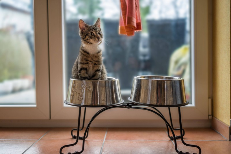 A sweet stray kitten sits in a dog bowl.
