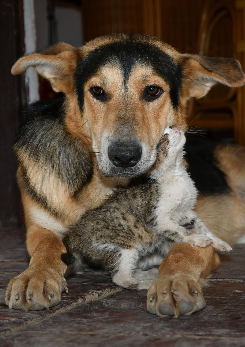 The female dog protects the stray kitten.