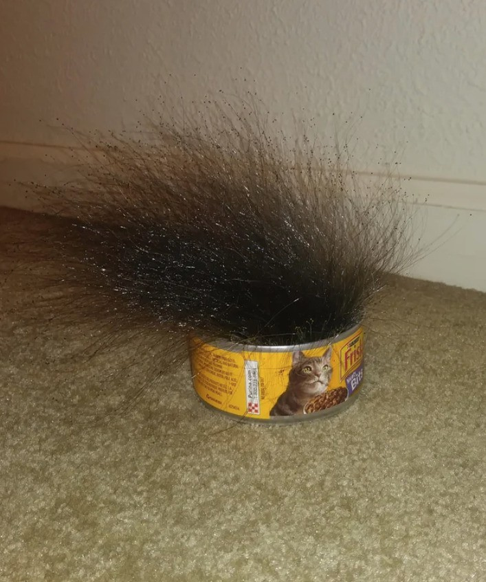 Disgusting mold growing in an open cat food can.