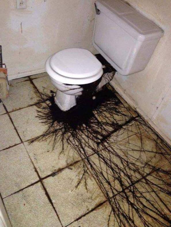 The toilet looks like it's cursed.