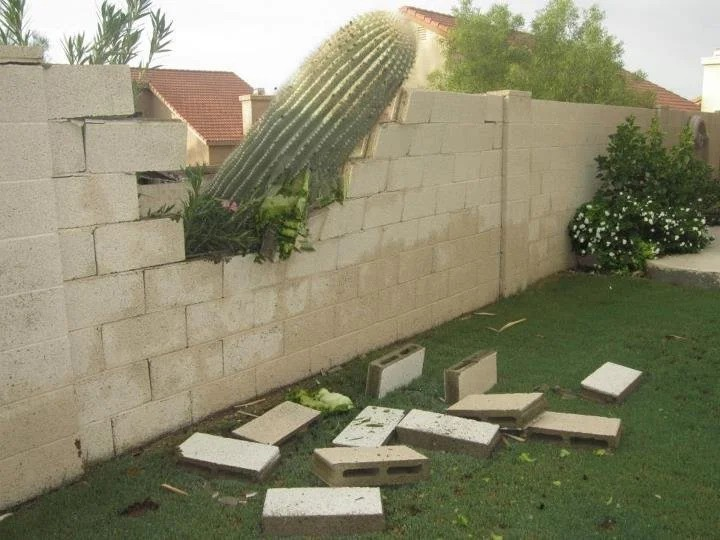 A Cactus destroyed the stone wall between two neighbors.