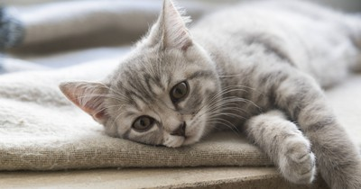 5 Signs Your Cat Is Lonely