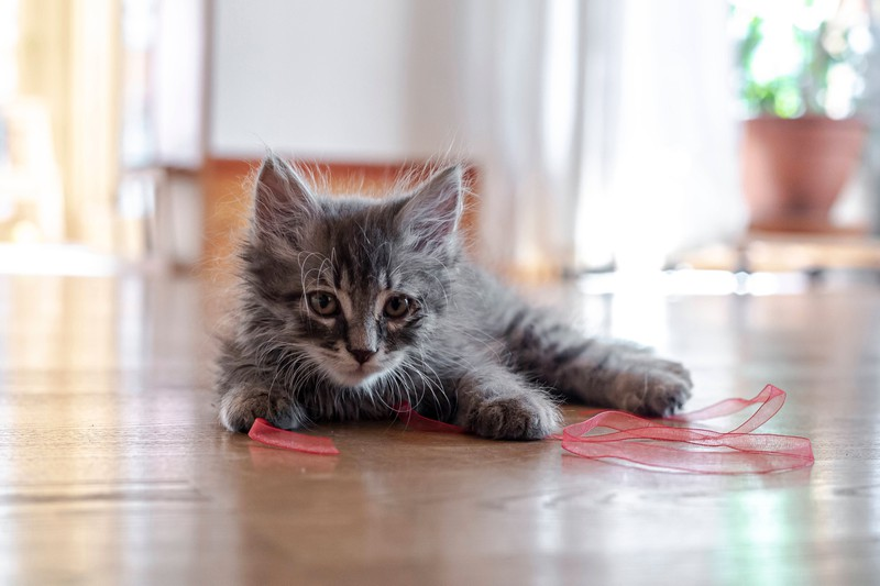 Some cats are hyperactive when they're lonely.