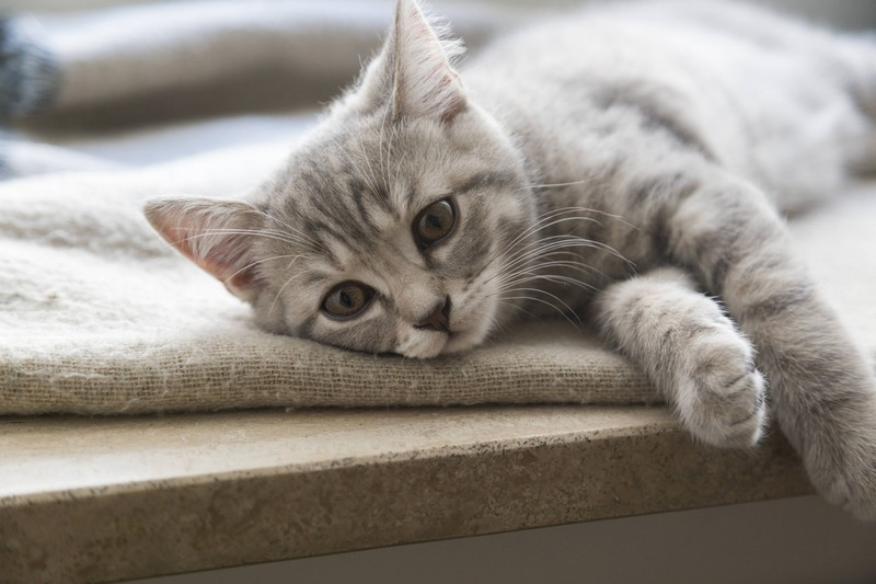 There are 5 signs that show you if your cat is lonely.