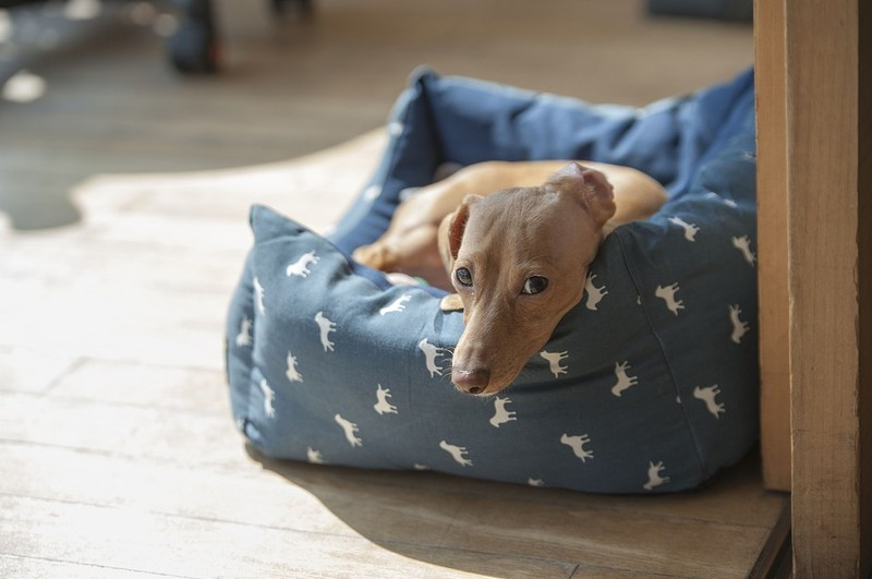 Dogs should sleep in their own beds.
