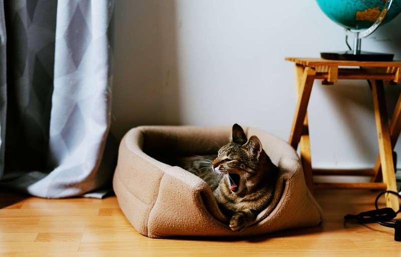 The cat needs to sleep in its own bed, so it doesn't interrupt its owners sleep.