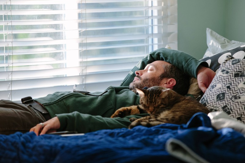 A cat is snug next to its owner.