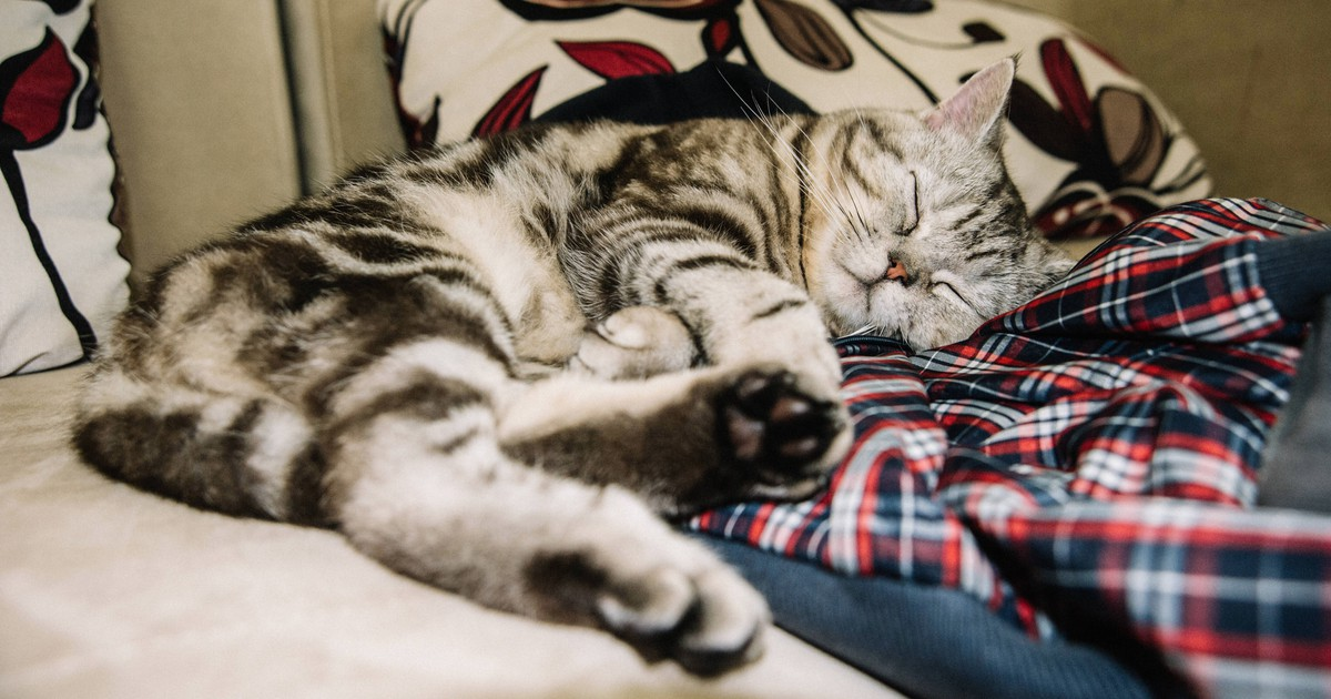 This Is Why Your Cat Sneaks Into Your Bed At Night:
