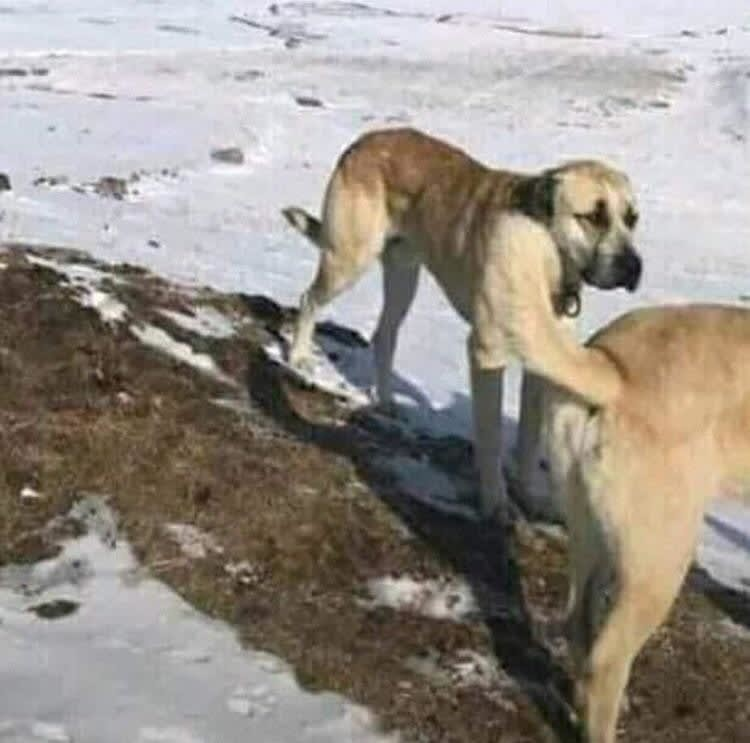 Two dogs showing an optical illusion