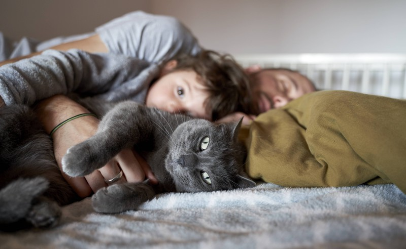 Cats love their owners when they sleep in the same bed as them.