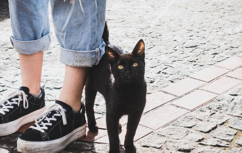 Cats show their love by stroking people around their legs.
