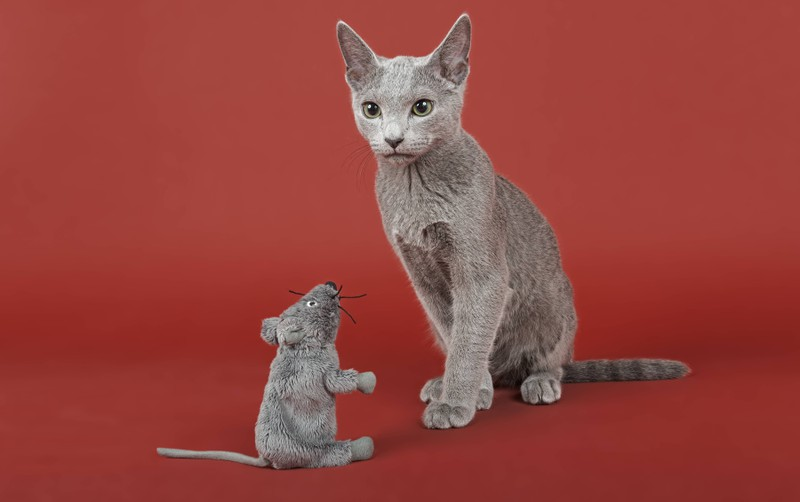 When cats bring gifts, i.e. mice or birds, they confess their love to humans.